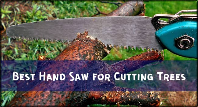 Best Hand Saw for Cutting Trees